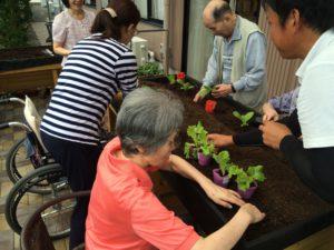 ベジトラグ野菜植替え3