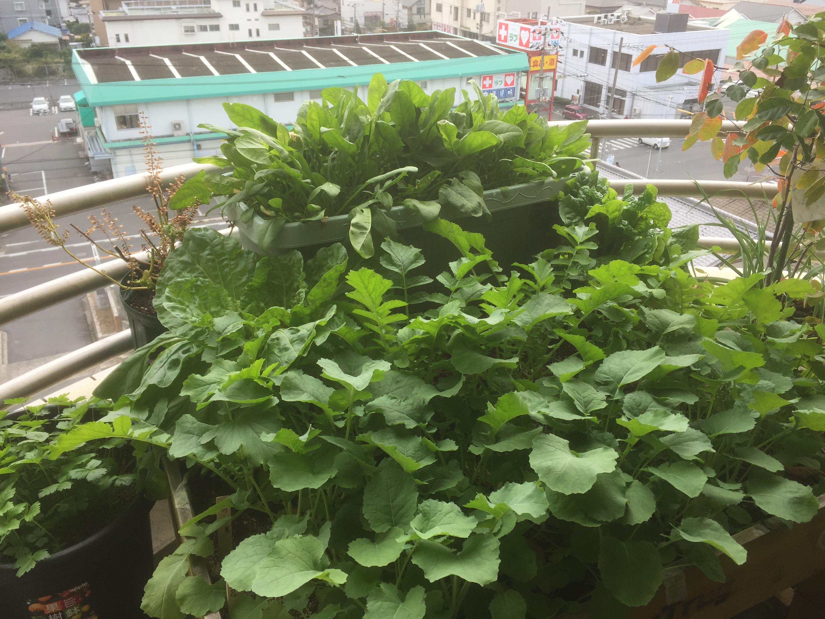 ベジトラグ菜園ジャングル